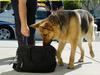 Synthetic Opioids Put Drug-Sniffing Dogs in Danger